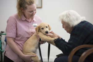 How to include Dogs in Aged Care for Better Wellbeing?